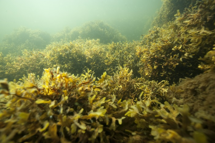 Climate change threatens marine environment in the northern Baltic Sea